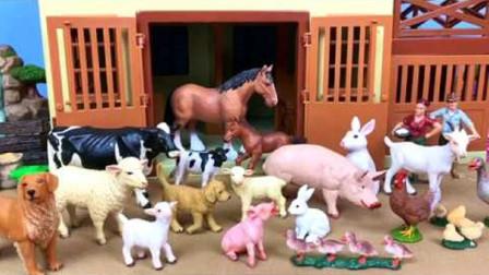 认识农场里常见的小动物山羊奶牛大公鸡