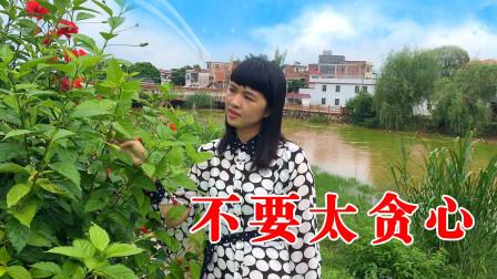 广西姑娘一首《男人女人不要太贪心》句句实话,太有才了,值得一听!