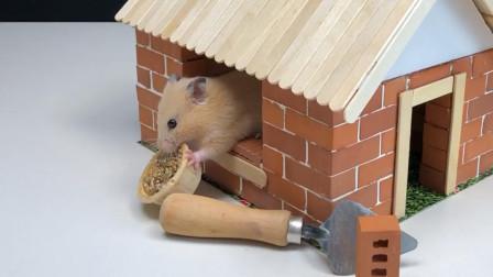 给仓鼠建了一间房子,让它住上砖瓦房