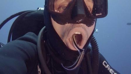 潜水员被清洁鱼当成食物 钻进嘴里找吃的 享受免费洗牙服务