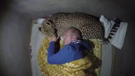 男子野营惊醒,周围爬满猎豹,吓得立马清醒