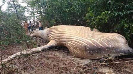 亚马逊丛林发现体长12米巨兽,专家看完后表示,它还没成年