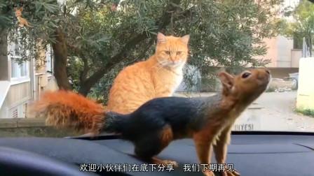 """松鼠被车外的猫咪盯上,""""黑猫警长""""上线了,是鼠都不放过!"""