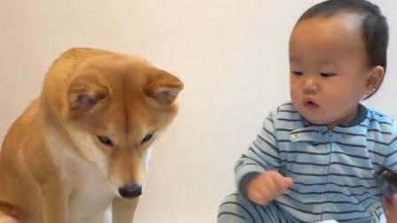当宝宝和狗狗只有一块饼干时,会发生什么有趣的事呢,忍住别笑