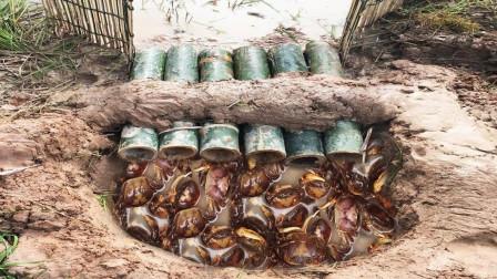 穷小哥为加餐摆下竹门阵,结果捕来肥美大蟹,吃货:我喜欢清蒸!