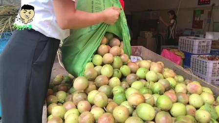 乡野网事:欢乐一刻,现在农村种植水果赚钱吗?除了在城市打工还有什么其它致富之路