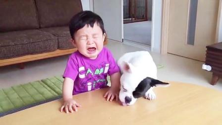 狗狗抢了宝宝的零食,宝宝气到大哭,下一秒狗