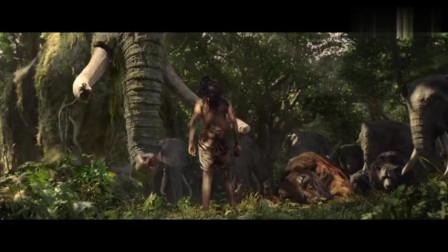 继泰山之后又一森林之王,赶猎人,维护森林和平