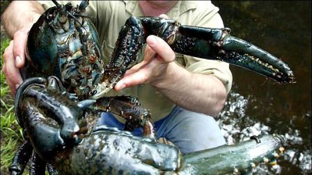 世界上最奇异的10种甲壳动物,排第3的这种小龙虾体重可达12斤!