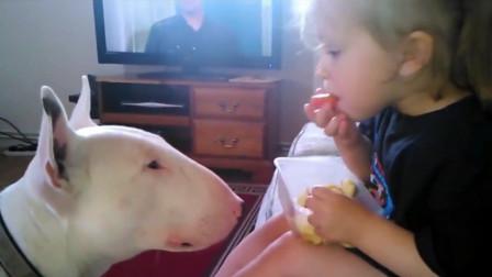 小宝宝一把夺走汪星人的狗粮,接下来狗狗的动作,爸妈都笑抽了