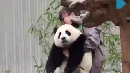 新闻早报 2019 吃点心拆礼物 18只大熊猫宝宝集体过生日
