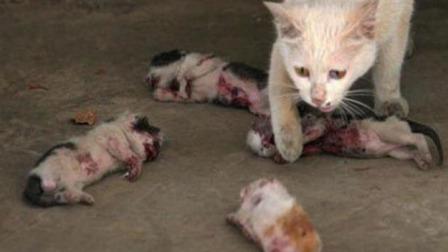 猫妈妈4只小猫都被人毒害,它喊着眼泪想叫它们起来!