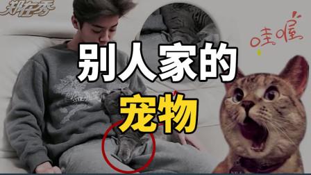 看完这个视频,才知道什么是别人家的宠物