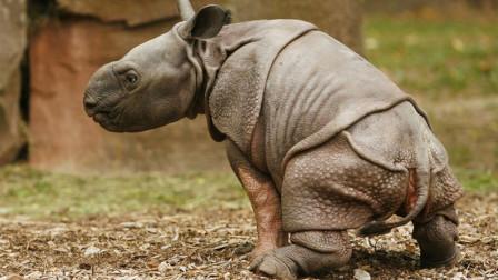 亚洲最危险的动物Top10,第1名体型虽小,却在山西一年杀死40人!