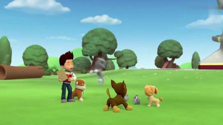 汪汪队立大功:莱德给小兔子发胡萝卜,狗狗也要!