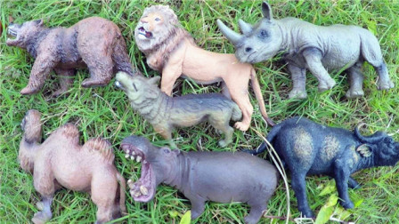 小马识动物 认识犀牛等7种常见的陆地动物