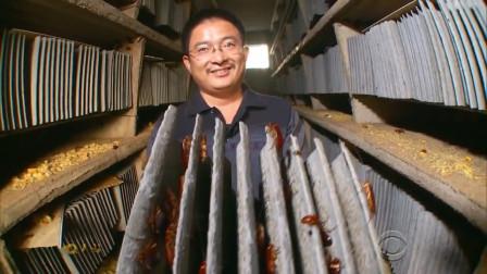 中国大叔又火了!养10亿只蟑螂,宣称建世界最大蟑螂工厂,他想干嘛?