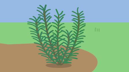 院子里种植了许多散发着香气的迷迭香