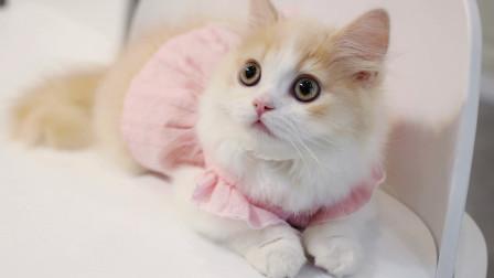 花花与三猫的日常 女主人开星座餐厅给猫咪做千层蛋糕