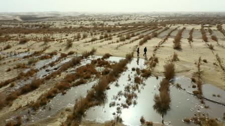 新疆美女植树治沙14年,和各族干部群众一起种出11.5万亩绿色长廊