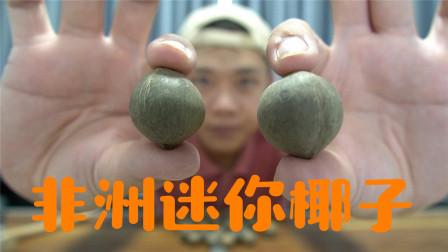 """试吃非洲特产""""海椰皇"""",世界最小椰子,吃起来可真不错"""
