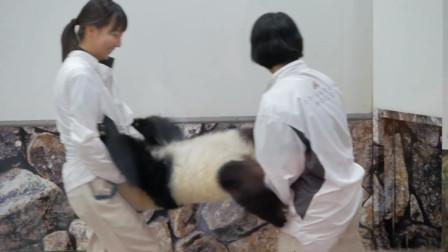 熊猫宝宝不肯回家,奶妈看不下去直接抬走,画面让人哭笑不得