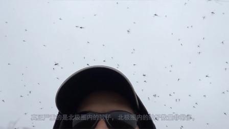 为什么北极圈内蚊子这么多,是什么原因导致的呢?今天算长见识了