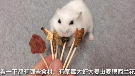 小仓鼠吃美味的串串香,伙食太好了,惹得主人羡慕嫉妒恨