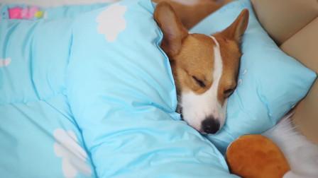 冬天太冷狗狗也不愿离开被窝,最后却因为小伙伴来找起床了