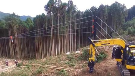 """日本砍树还要拉铁丝网干什么?看完才知道这""""黑科技""""效率有多高!"""