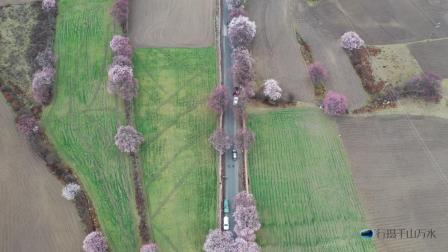 航拍西藏波密桃花沟,粉红的桃花与绿色的青稞组成一幅田园风光画