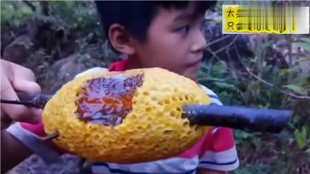 野外现摘野生蜂巢,吃蜜蜂还在上面呢小帅哥咬一口蜂蜜直流