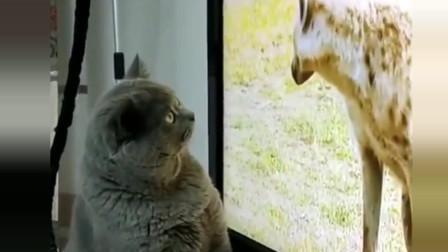 我家主子第一次见这样的动物,目瞪口呆,完全不敢相信!