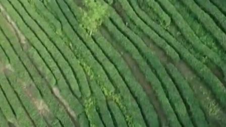 新闻直播间 2019 共和国发展成就巡礼,甘肃陇南:生态优先 绿色发展