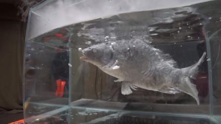 零下190度的液氮有多恐怖?看看这条鱼的下场,你就懂了