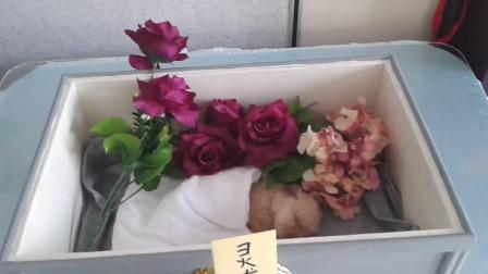 小奶狗刚养一礼拜就死亡,小伙不舍亲自举行葬礼