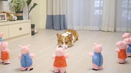 在狗狗面前打开10只小猪佩奇,狗主人都快自闭了