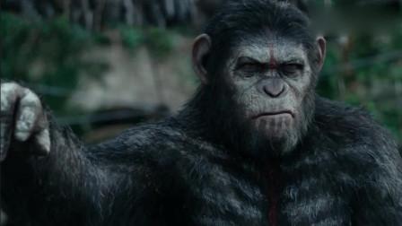 猩球崛起2:人类误闯大猩猩领地,凯撒带着大军压境,结果却走了