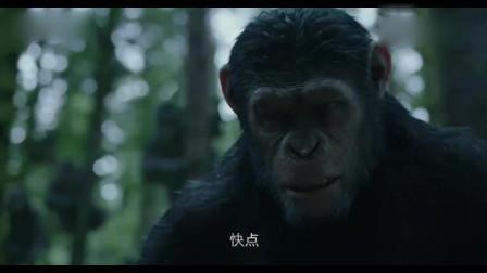 猩球崛起2:小伙来到深山探险,不料碰上两只大猩猩,小伙吓坏了