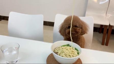 原來狗狗還可以這樣吃面條,表情太萌了吧