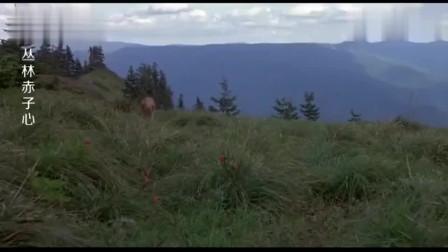 丛林赤子心:大灰狼追着狗狗不放,狗狗藏在草丛里,成功躲过大灰狼的