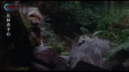 丛林赤子心:狗狗跑去偷猎人食物,自己不吃,却拿给豹仔仔吃