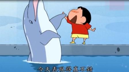 蜡笔小新:小新和海豚互动 还见证了一场特殊的求婚