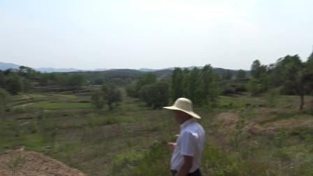 武贵风水宝地,王君植大师在鸡冠山看风水视频,实战风水讲解古代风水大师寻龙点穴案例