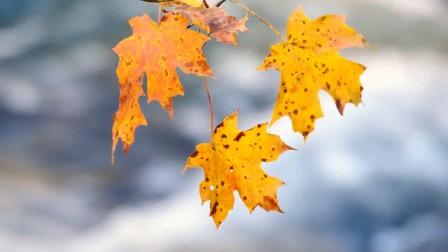 暑去凉来 一叶知秋——在落叶中寻找秋天的颜色