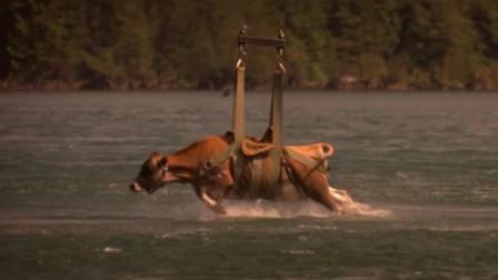 湖中出现可怕怪物,人们用牛当诱饵,浮出水面的瞬间太可怕了