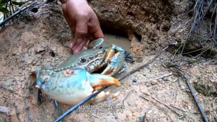 """海潮退下这里很多螃蟹洞,刀仔从螃蟹洞夹出""""蟹王"""",这回发财了"""
