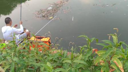 夏季小河水浅,钓友浮草边没想也能钓获大鲫鱼、看着都过瘾
