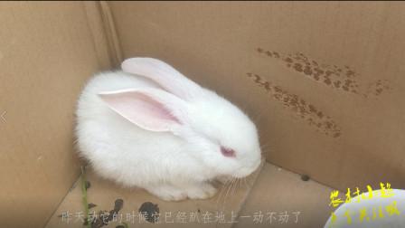 农村小超:昨天把小兔子放过兔窝,就立马生病了一只,把我吓到了