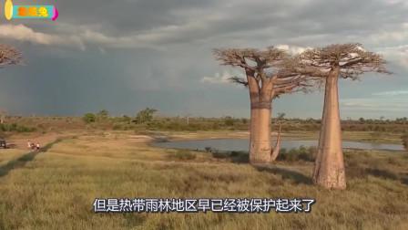 游游兔:我们都误解非洲了!世界地图套路深,非洲实际面积大到怀疑人生